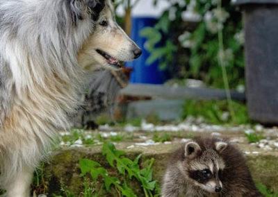 Tierschutz Bühl